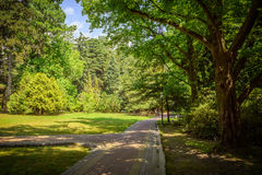 Summer landscape in tropical garden. Arboretum of Sochi. Royalty Free Stock Photography