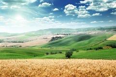 Summer landscape of Tuscany Royalty Free Stock Image