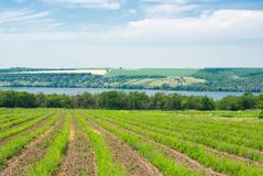 Summer landscape in Ukraine. royalty free stock image