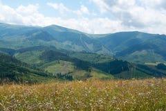 Summer landscape in the Ukrainian Carpathians Stock Images