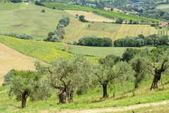 Summer landscape in Umbria (Italy) Stock Image
