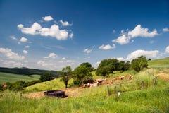 Summer Landscape Unterbodnitz Royalty Free Stock Images