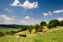 Summer Landscape Unterbodnitz Stock Images