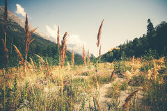 Summer Landscape valley and forest in mountains Stock Photography