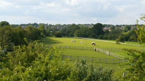 Summer landscape view horses on meadow field horse ranch UK stock video footage
