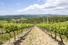 Summer landscape with vineyards in Tuscany Stock Photography