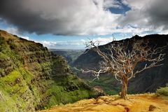 Summer landscape at waimea canyon. Summer landscape with dead tree in the foreground at Waimea canyon, Kauai, Hawaii royalty free stock image