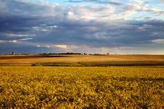Summer landscape - wheat field Stock Photography