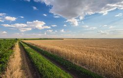 Summer Landscape with Wheat Field Stock Photos