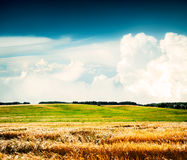 Summer Landscape with Wheat Field and Clouds Royalty Free Stock Photography