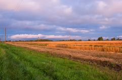 Summer Landscape with Wheat Field and Clouds stock photo