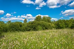 Summer landscape with white flowers. Stock Image