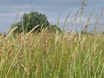 Summer landscape of wild field in the tuscan countryside.  Royalty Free Stock Images