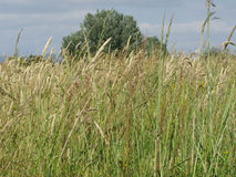 Summer landscape of wild field in the tuscan countryside Royalty Free Stock Photo