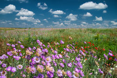 Summer landscape with wild flower Stock Photos