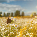 Summer landscape with wild flowers Stock Photography