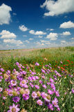 Summer landscape with wildflowers. Summer landscape beautiful sky and wildflowers royalty free stock image