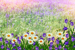 Summer landscape with wildflowers. Royalty Free Stock Photos