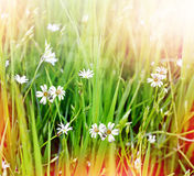 Summer landscape with wildflowers. Stock Image
