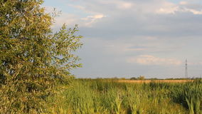 Summer landscape - willow and reeds on the river bank. The old river in the field, overgrown with grass stock footage