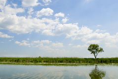 Free Summer Landscape With River. Royalty Free Stock Photo - 4217835