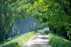 Free Summer Landscape With Wood Road Stock Photography - 10530972