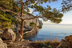 Summer landscape with wooded cliffs by the sea. Black Sea. Stock Image