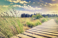Summer landscape with wooden plank board walkway Royalty Free Stock Images
