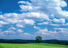 Summer Landscape and woods. Summer Landscape,illusttrations,woods,clouds,a beautiful day royalty free stock photos
