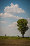 A summer landscapes Royalty Free Stock Photos
