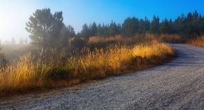Summer lanscape with road Royalty Free Stock Photo