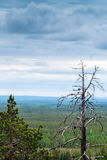 Summer In Lapland. A view from the top of the Pyhatunturi fjell. You could see quite far away royalty free stock photo