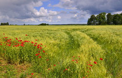 Summer in Latvian countryside Royalty Free Stock Image