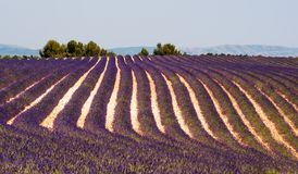 Summer lavender fields near Valensole. Endless and fragrant summer lavender fields in Provence near Valensole, France Stock Photography