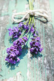 Summer lavender meadow Royalty Free Stock Photo