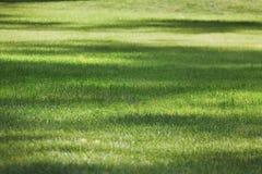 Summer lawn, green grass texture Stock Photo