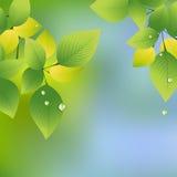 Summer_leaf Stock Images