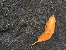 Summer leaf. Royalty Free Stock Photo