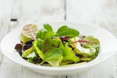 Summer leaf salad Royalty Free Stock Images
