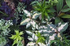 Summer leafy photo background. Tropical foliage plant in exotic garden. Stock Photo