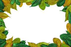 Summer Leaves frame Royalty Free Stock Images