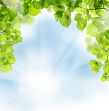 Summer leaves on greenery background. Summer leaves on floral greenery background stock photography