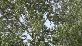 Summer leaves longshot,summer forest. Summer leaves longshot , summer forest stock footage