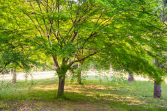 Summer Leaves in a Park Stock Photo