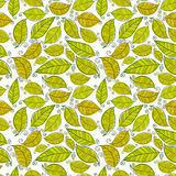 Summer leaves seamless pattern. Royalty Free Stock Image