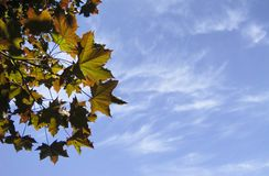 Summer leaves silhouette. Leaves against summer sky; good copy space Stock Photo
