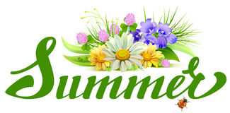 Summer lettering text. Bouquet of wild flowers chamomile, clover, bells Stock Image