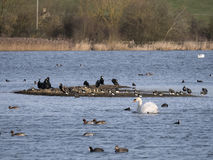 Summer  Leys Nature Reserve Wollaston Stock Images