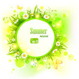 Summer light background with daisies.  royalty free illustration