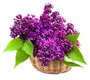 Summer lilac flowers in basket Stock Image